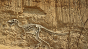 首都科学讲堂:化石档案里的恐龙信息