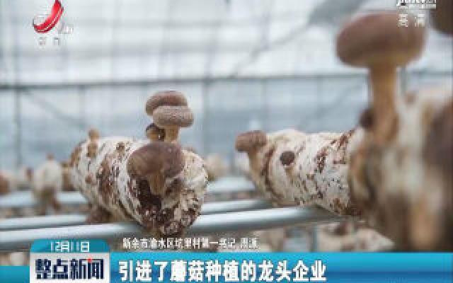 """【第一书记晒丰收】新余市渝水区坑里村:小小蘑菇移走""""三座大山"""""""