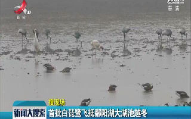 首批白琵鹭飞抵鄱阳湖大湖池越冬