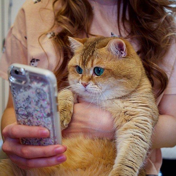 橘猫可爱图片头像