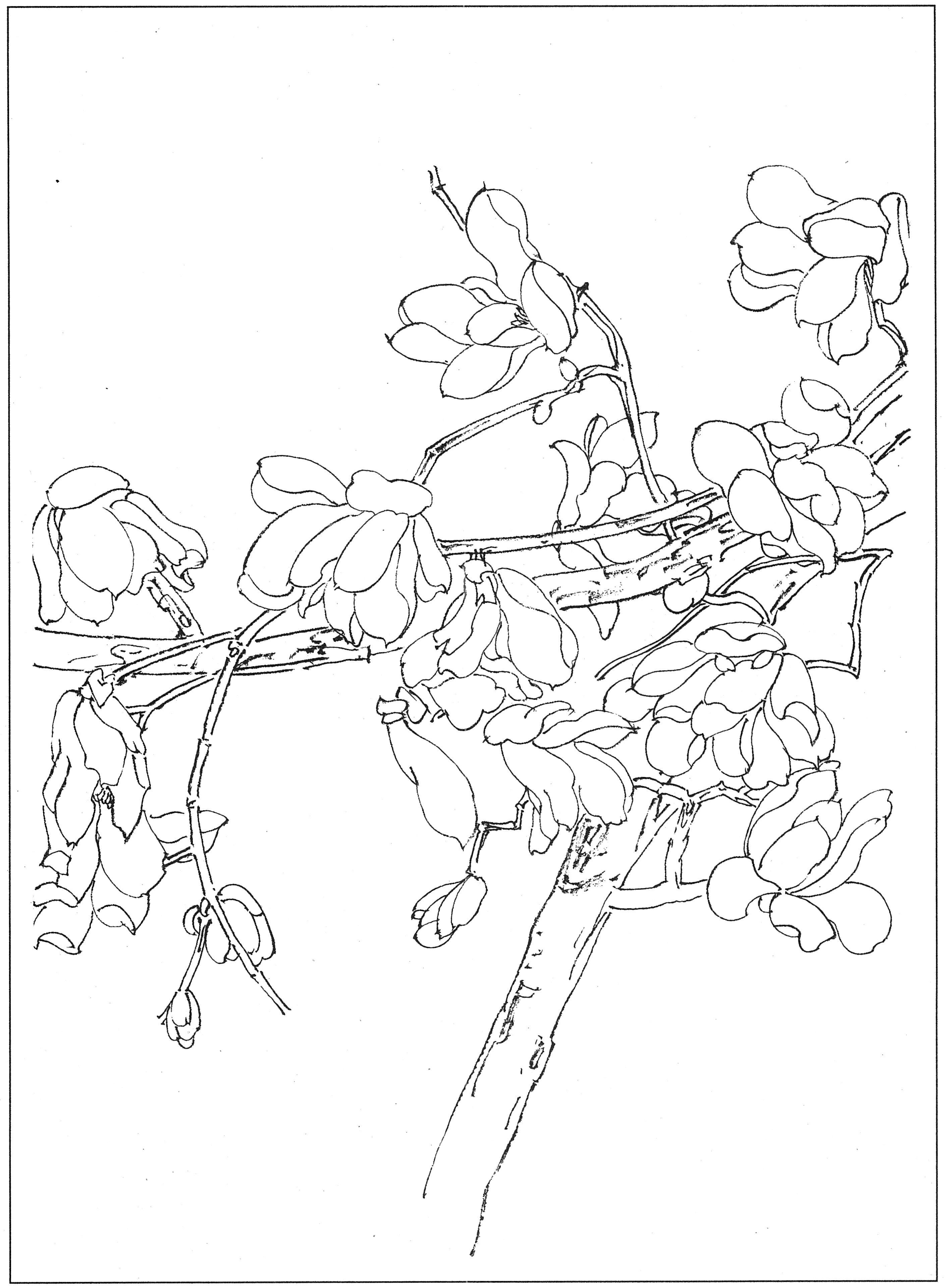刻玉玲珑,吹兰芬馥,国画白描玉兰花高清素材19幅
