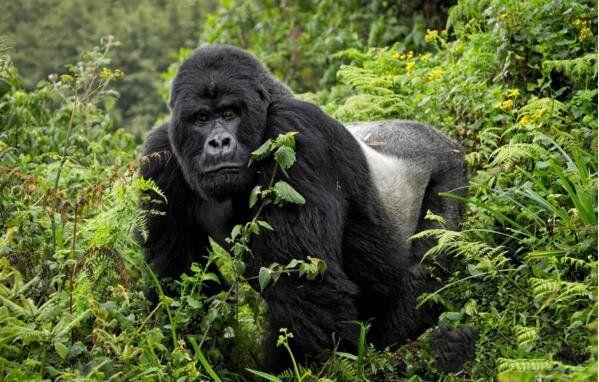 地球上10大最濒危的动物
