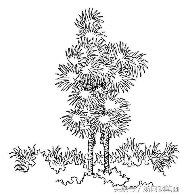 步骤图728棕榈-钢笔画零基础入门教程