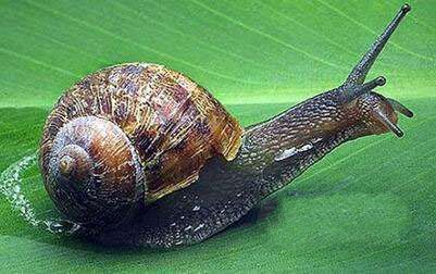 地球上10大速度最慢的动物,乌龟第五,蜗牛第二,海马居