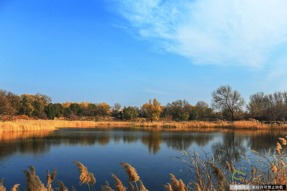 北京图见|初冬漫步圆明园 芦苇瑟瑟正入画