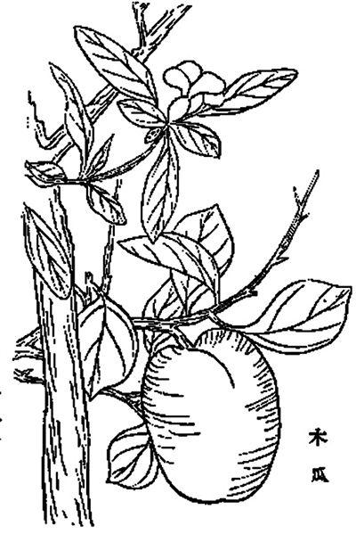 简笔画 设计 矢量 矢量图 手绘 素材 线稿 400_599 竖版 竖屏