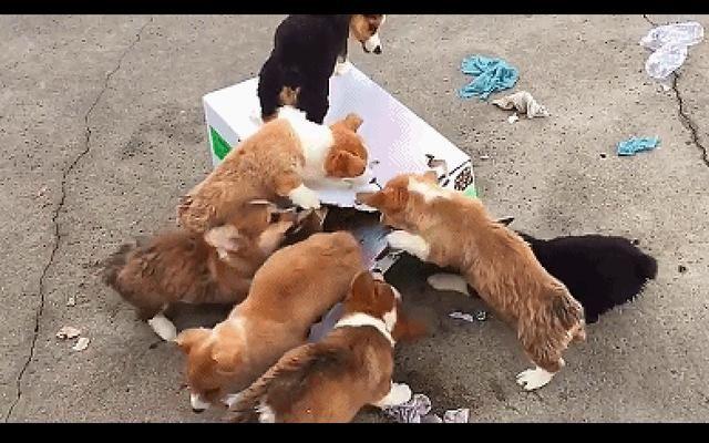 手工纸盒制作动物牙齿