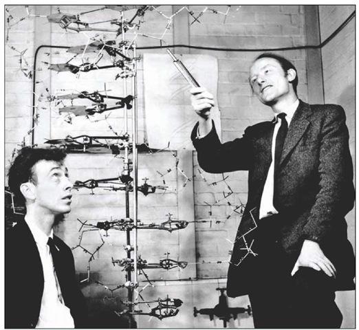 双螺旋结构:詹姆斯·沃森(左)与弗朗西斯·克里克