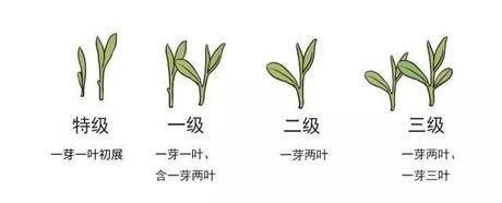 """""""龙井茶""""vs""""西湖龙井茶"""""""