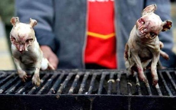 非洲人只要能吃就下锅 他们是这样对待动物的图片
