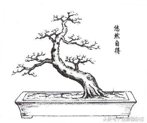 简笔画 盆景 盆栽 手绘 线稿 植物 490_410