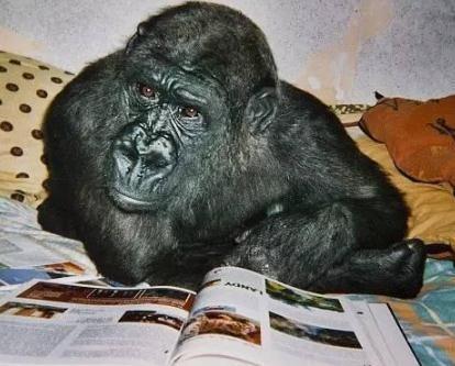 大猩猩表情包伸手要钱分享展示图片
