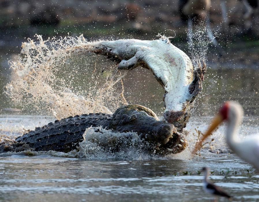 动物世界的残酷真相:弱肉强食 适者生存图片