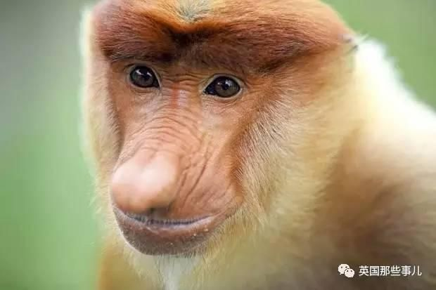 猴子怎么去除