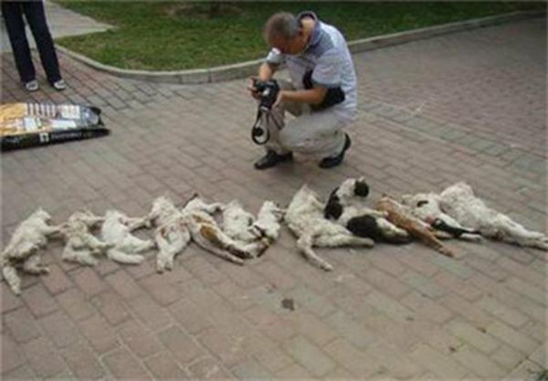 小区流浪猫被保安捕杀,13只猫咪排成一排,画面让人忍不住落泪!