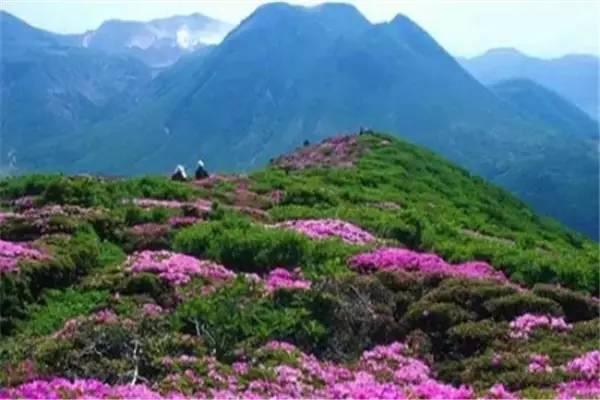 杨岐山风景名胜区 杨岐山风景区位于江西省萍乡市上栗县境内,国家级