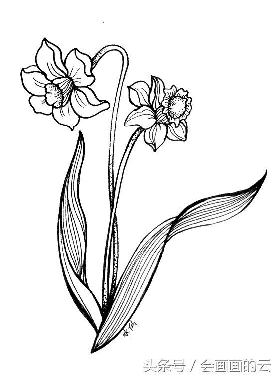 简笔画入门植物线描手绘图,一起画起来吧!