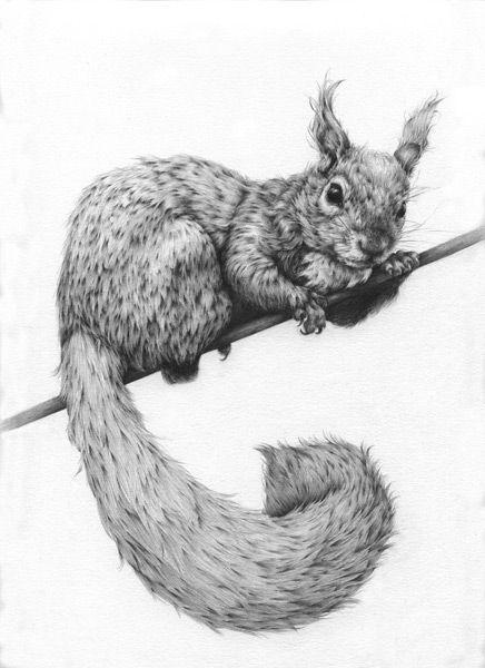 英国画家,写实动物素描绘画,逼真写实值得收藏学习
