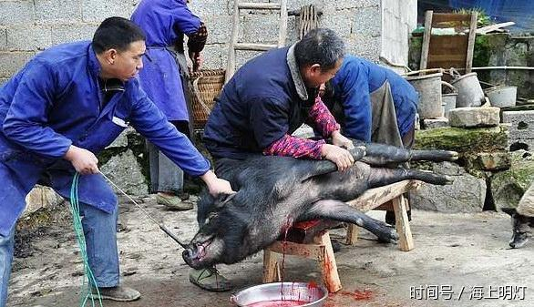 农村大爷杀野猪款待第一次上门的城里女婿,几个村民一