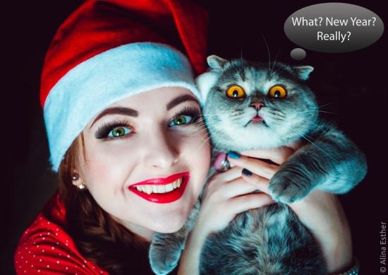 超萌照片帝粉丝吐舌猫咪俘获大量表情望表包情片图绝图片