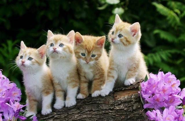 心理测试:选出最萌的小猫咪,测出你的笑容是不是发自内心的