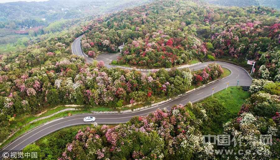 2017年4月13日,贵州省百里杜鹃风景区旅游公路.