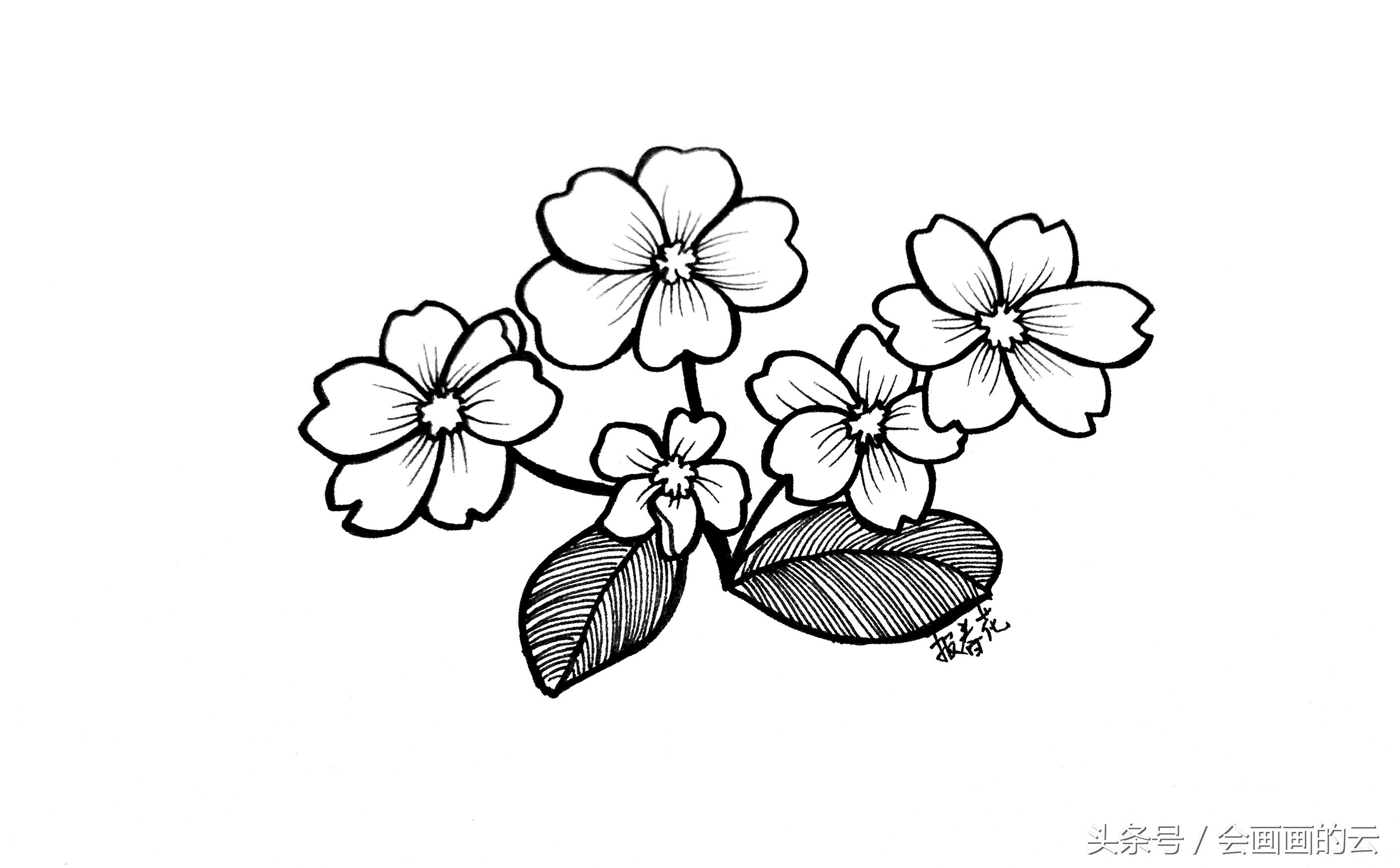 简笔画入门植物线描手绘图,一起画起来吧!-北京时间