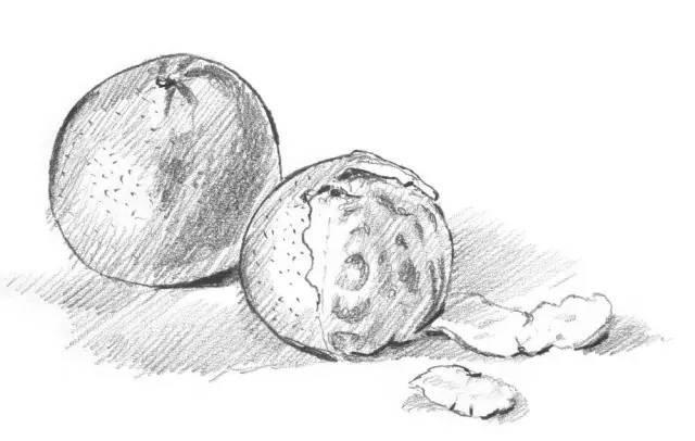 【零基础素描】橘子的绘画步骤