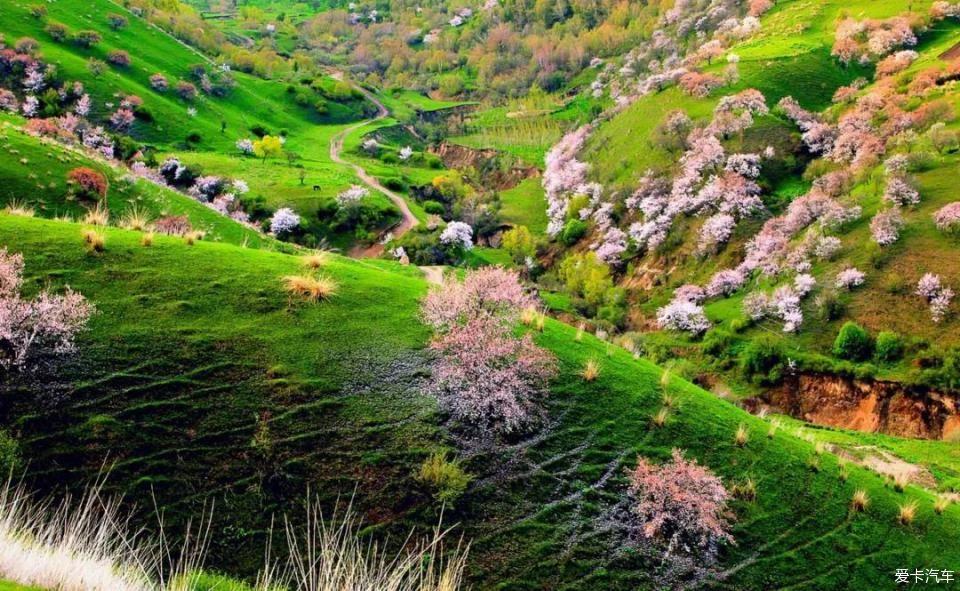 当春天的暖阳卷着温柔的风 点点细雨 润色着清浅的小草 处在山间的