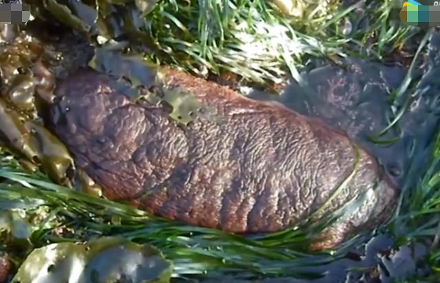 刻石头动物像长方片