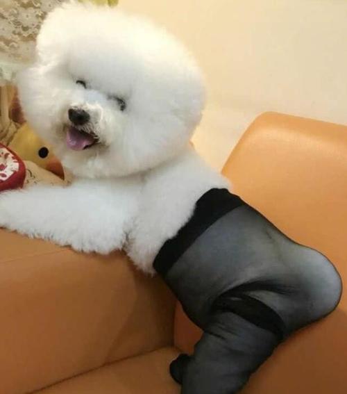 用丝袜自制立体动物