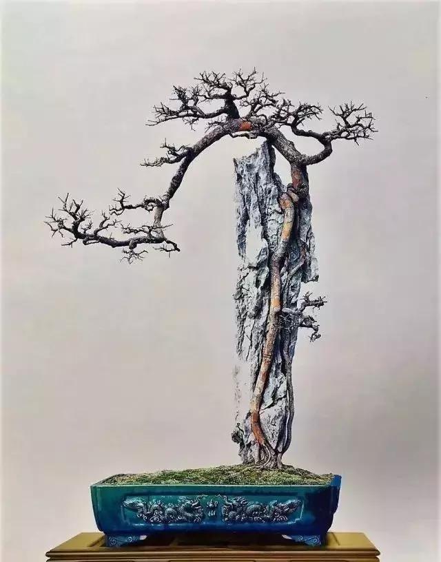 盆景作品中悬崖式,附石式等盆景作品中的探枝,飘枝如云烟缭绕在山峰图片