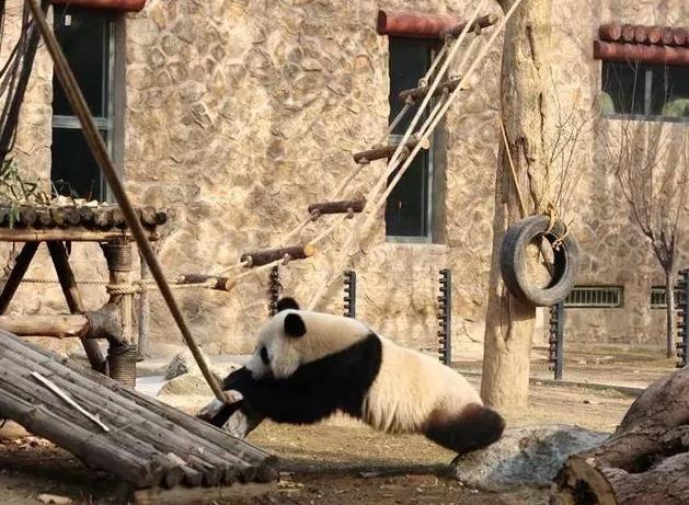 济南动物园,动物新年新家新气象!
