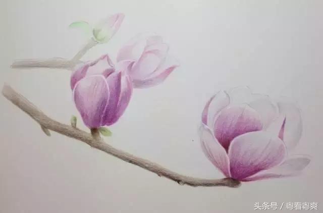 彩铅教程,画一朵等待春天的玉兰花
