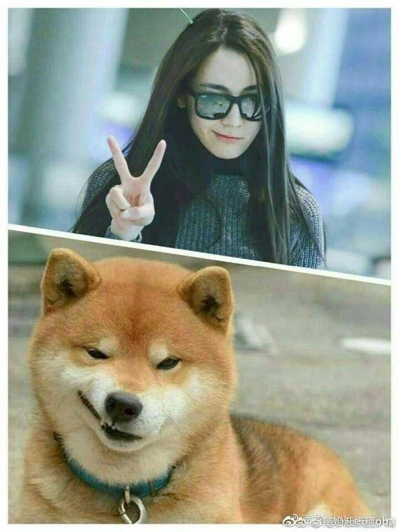 当明星与小动物爆笑撞脸,哪一位萌到了你?迪丽热巴赵丽颖最可爱