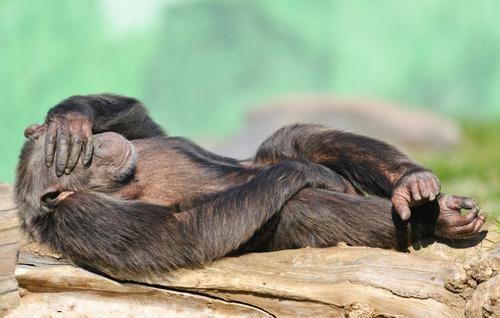 动物们的睡姿,真的是千奇百怪