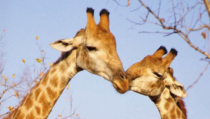 动物界的温情图片,感动的同时萌化了我们的心