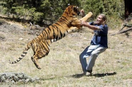 遇到像宁波动物园的老虎吃人事件,我来教你怎么做?