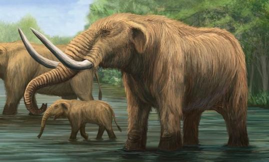 大象:最大的陆地动物