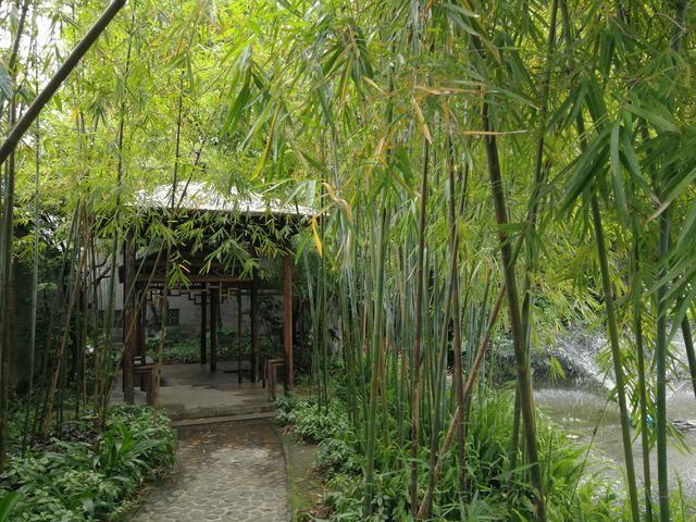 曲径通幽处,茂密的竹林,清高纯朴的气质,清新脱俗的风韵,心情仿佛也