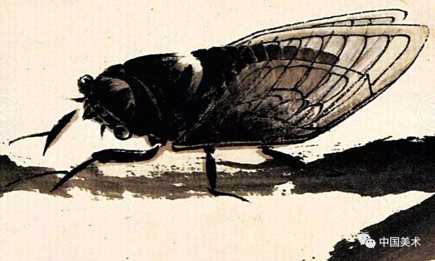 齐白石笔下的蝉,把写意与工笔画有机结合在一起,草虫精妙,惟妙惟肖