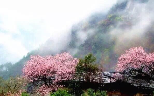 """三生三世桃花景色 普者黑:""""小桥流水人家""""这是一个美丽的地方气候"""