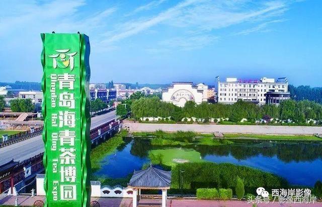 青岛西海岸新区海青镇|竹韵茶香 北域江南