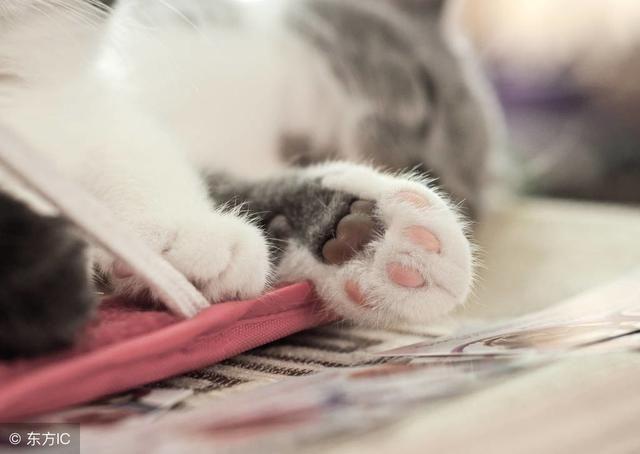 除日常撸猫外,一定每天都会趁猫咪不注意按一下那萌萌的小手.