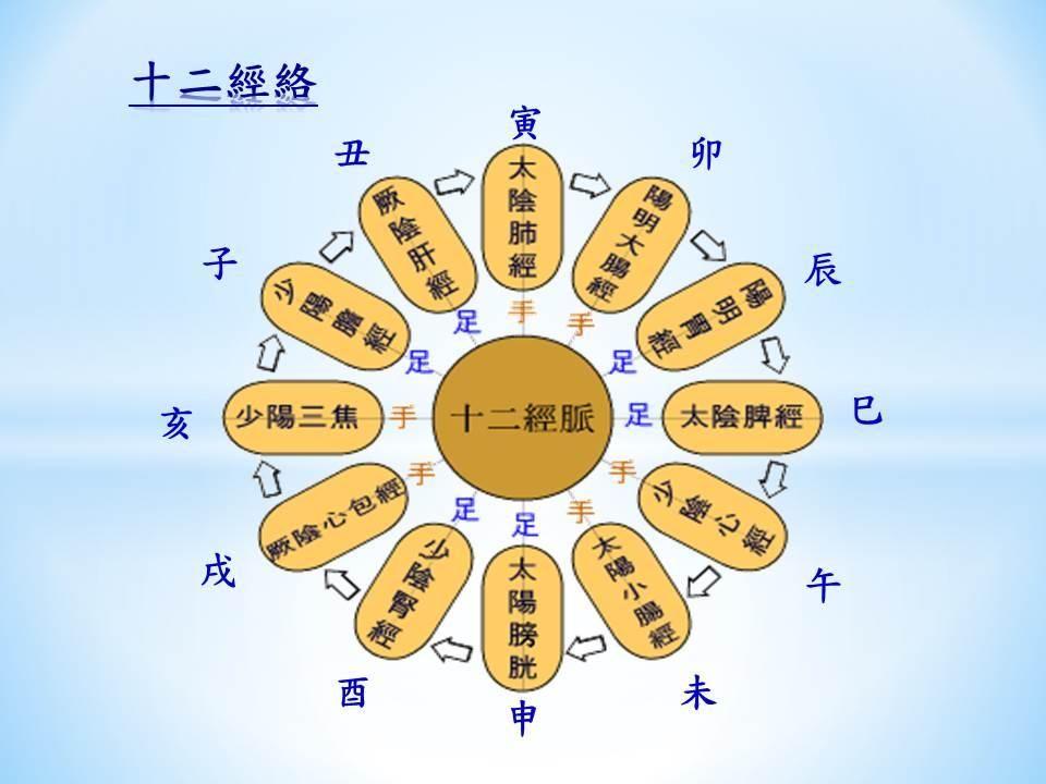 经络的主要内容有:十二经脉,十二经别,奇经八脉,十五络脉,十二经筋