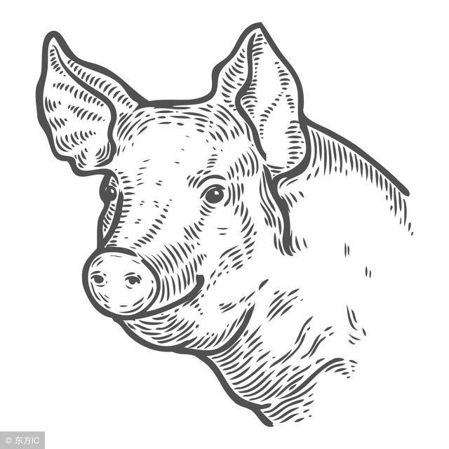 二零一九猪年手绘图