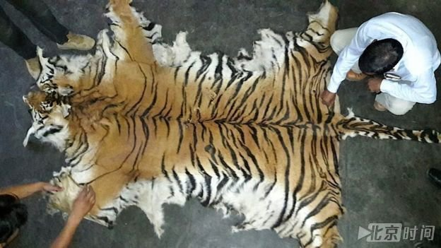 动物保护人士说,对老虎身体部位的需求继续导致偷猎.