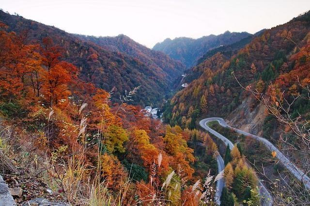 主要分布在南江光雾山,大坝森林公园,通江诺水河,空山坝遗址,巴州阴图片