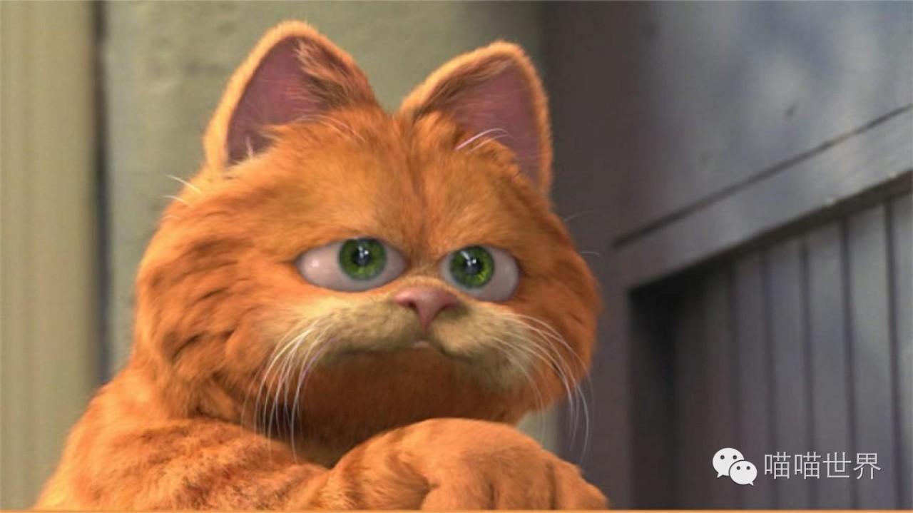一提起加菲猫,大家就会想起同名的好莱坞电影里哪个懒惰贪吃,还喜欢和