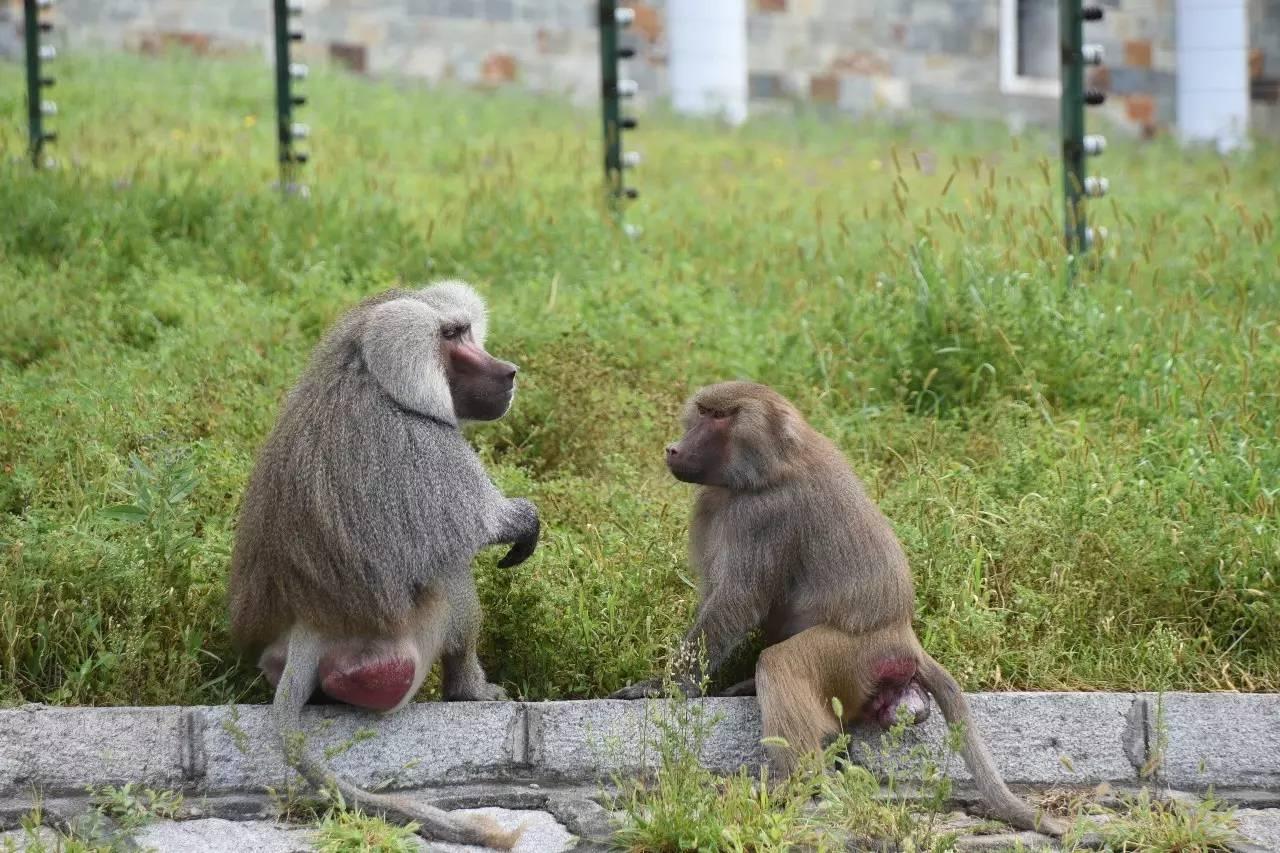 动物爱情宣言--北方森林动物园动物情侣花样秀恩爱